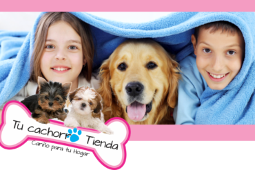 ¿Por qué somos los mejores en la venta de cachorros?