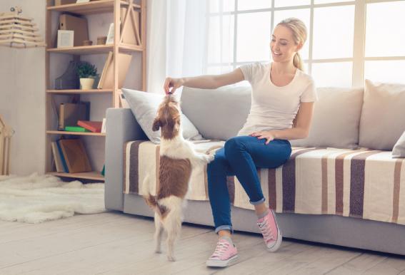 3 momentos en los que debes darle un premio a tu perro