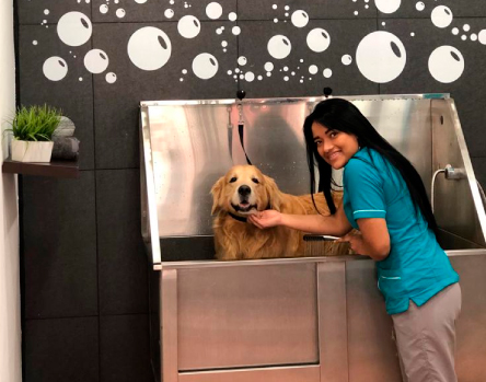 servicio-veterinaria-tu-cachorro2
