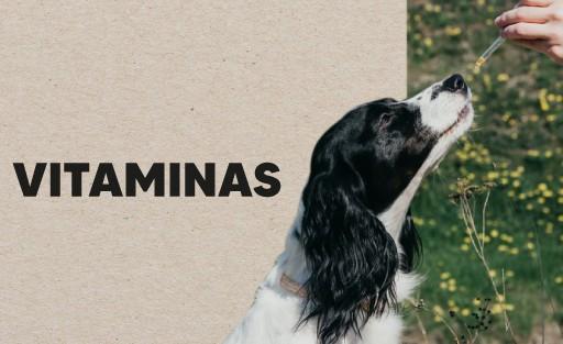 vitaminas para cachorros