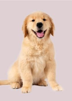 cachorros razas grandes