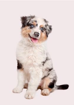cachorros razas medianas